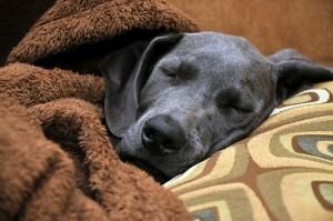 Where sleeping dog lie
