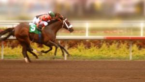 race horsesr