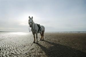 Horse on Irvine Beach